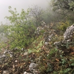 Kaktuszokkal benőtt fal (Fotó: Géczi Orsolya)