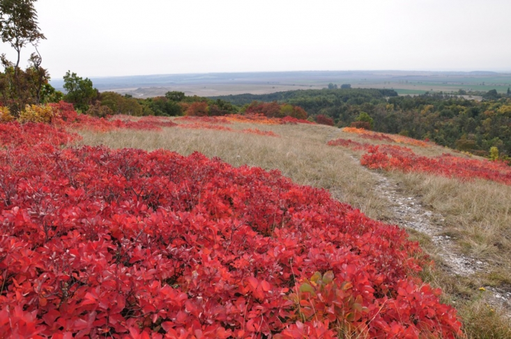 Haraszt-hegy, cserszömörcés ősszel (fotó: Klébert Antal)