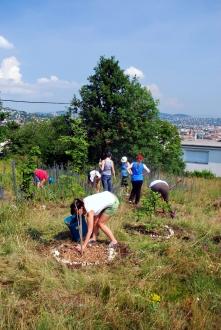 Kertészkedés Sas-hegyen