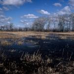 Turai legelő (fotó: Szénási Valentin)