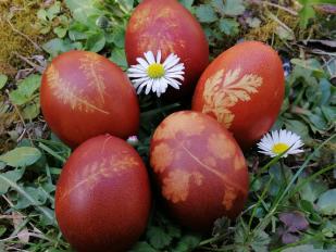 Berzselt tojások (Vatai Anna)