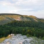 A Budaörsi Kopárok, a szarvas álganéjtúró élőhelye 2018 júliusában (Fotó: Merkl Ottó)