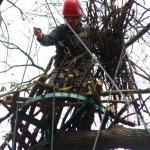 Fekete gólya fészek kihelyezése (fotó: Novák Adrián)