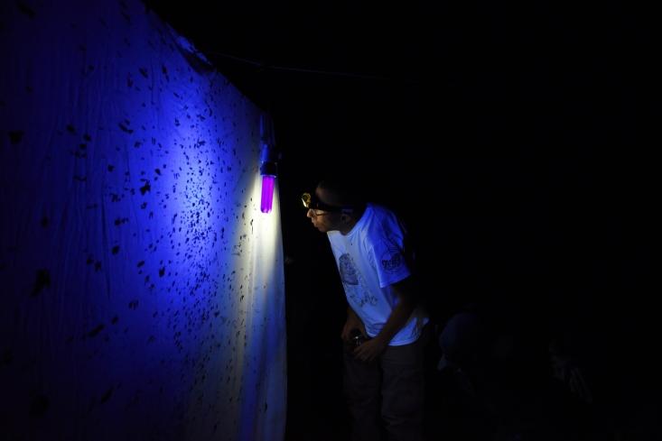 Fénycsapdázás OLT VI. Börzsöny (Fotó: Berkó Gyöngyi)
