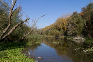 A Duna hullámterében visszamaradó vizek is fontos élőhelyek (Fotó: Selmeczi Kovács Ádám)