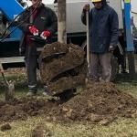 Komoly földmunkával a stabilabb gólyafészket tartó oszlop kilengése ellen,  Szár (Fotó: Tóth Péter)