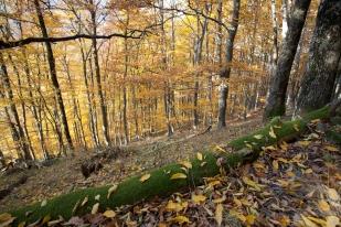 Őszi erdő (Fotó: Selmeczi-Kovács Ádám)