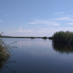 Velencei-tó, úszólápok