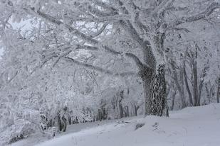 Tél a Gerecsében (Fotó: Csonka Péter)