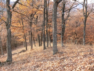 Őszi erdő Királyréten (Fotó: Takáts Margit)