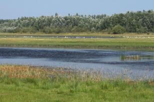 Tápió-vidék, Sós-tavak (Fotó: Vidra Tamás)