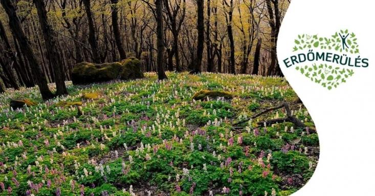 Bevezetés az erdőmerülésbe