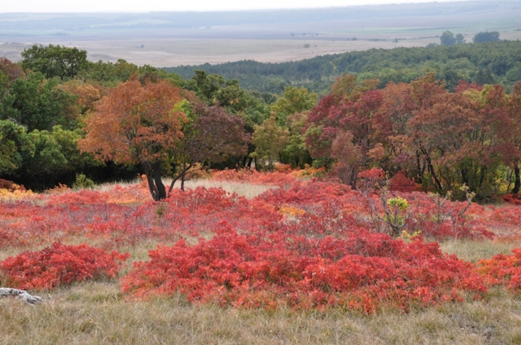 Cserszömörcés erdő (fotó: Klébert Antal)