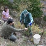 Közös együttműködéssel az Ökológiai Kutatóközpont tudományos munkatársaival, Csecserits Anikóval és  Rédei Tamással (Fotó: Berkó Gyöngyi)