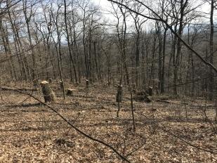 Erdőszerkezet-gazdagítás, mikro-élőhelyek és napsütötte lékek képzése (Fotó: Dr. Koncz Péter)