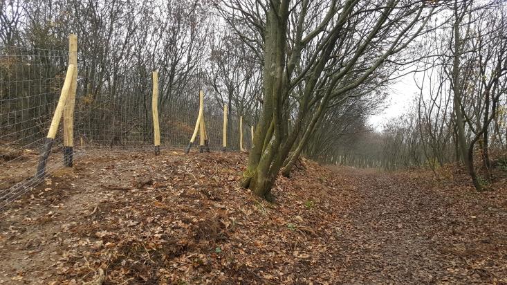 Az új kerítés (Fotó: Szontaghné Mosoni Dóra)