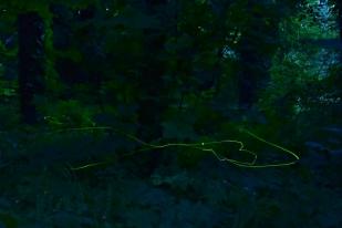 Szentjánosbogár-rajzás (Fotó: Berkó Gyöngyi)