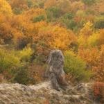 Sziklák a hegyoldalban (fotó: Pethő Judit)