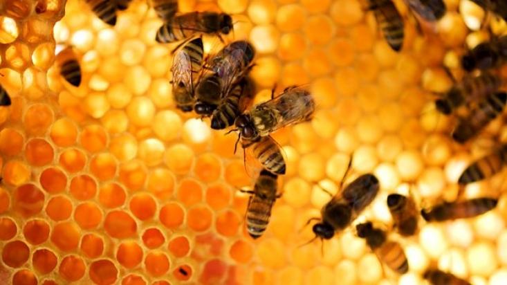 Méhek (Forrás: BBC)