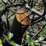 A területre behatolók fákat, cserjéket is kivágtak