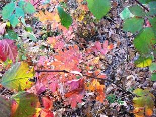 Őszi hangulat – levelek és formák Királyréten