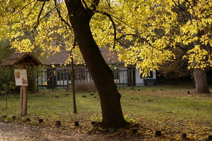 Őszi Jókai-kert