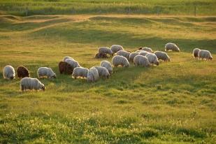 Legeltetés állattartás Dinnyés