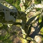 A Nagy Platán lombkoronájában (fotó: H. Kolláth Mária)