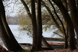 Duna erdő