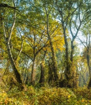 Őszi ártéri erdő