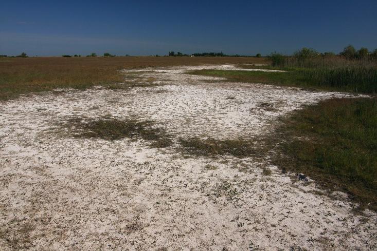 Vakszikes legelő Farmos határában
